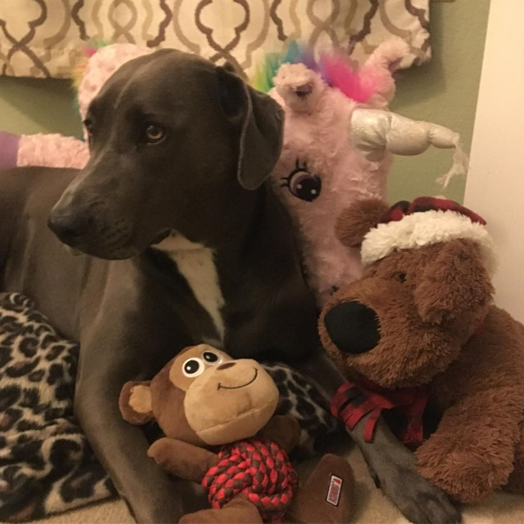 dog amid stuffed toys
