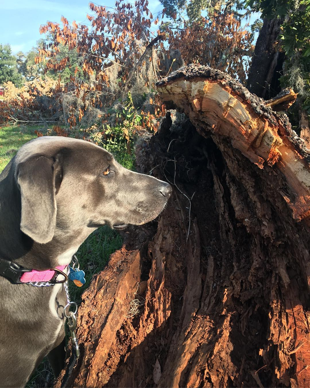 puppy rey profiling a tree