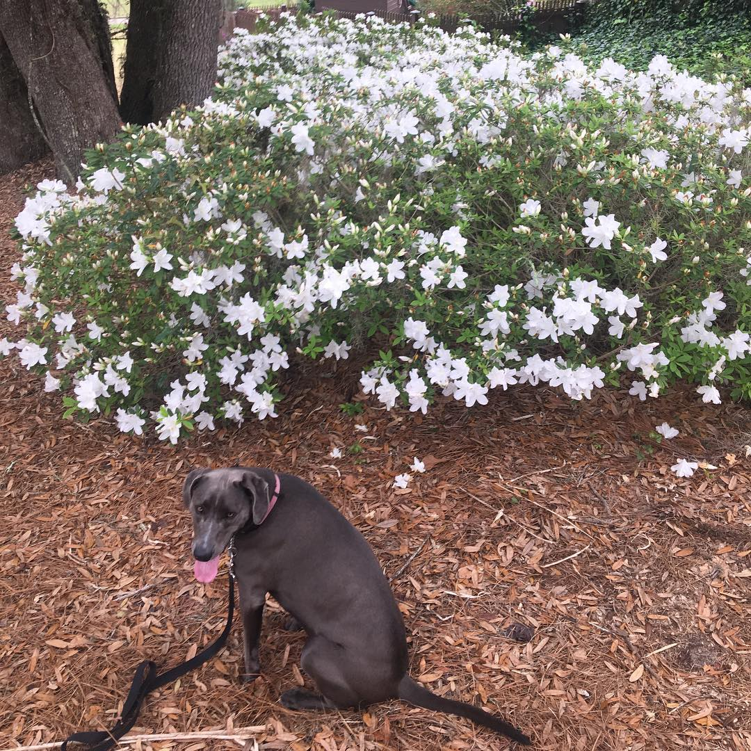 dog and white flowers