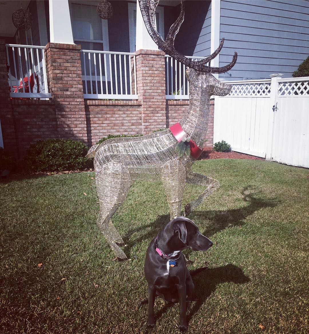 dog and xmas decoration looking sideways