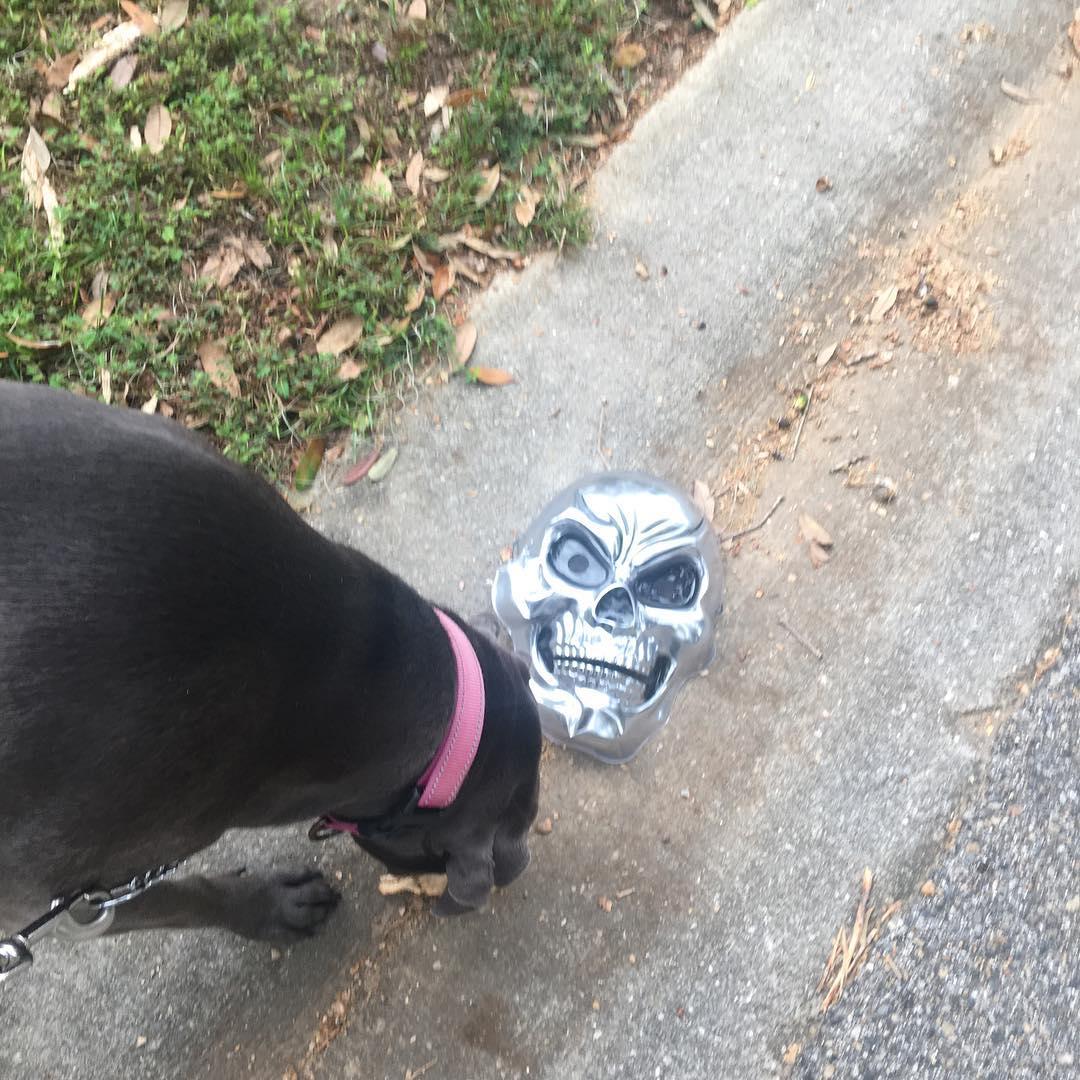 halloween mask on ground
