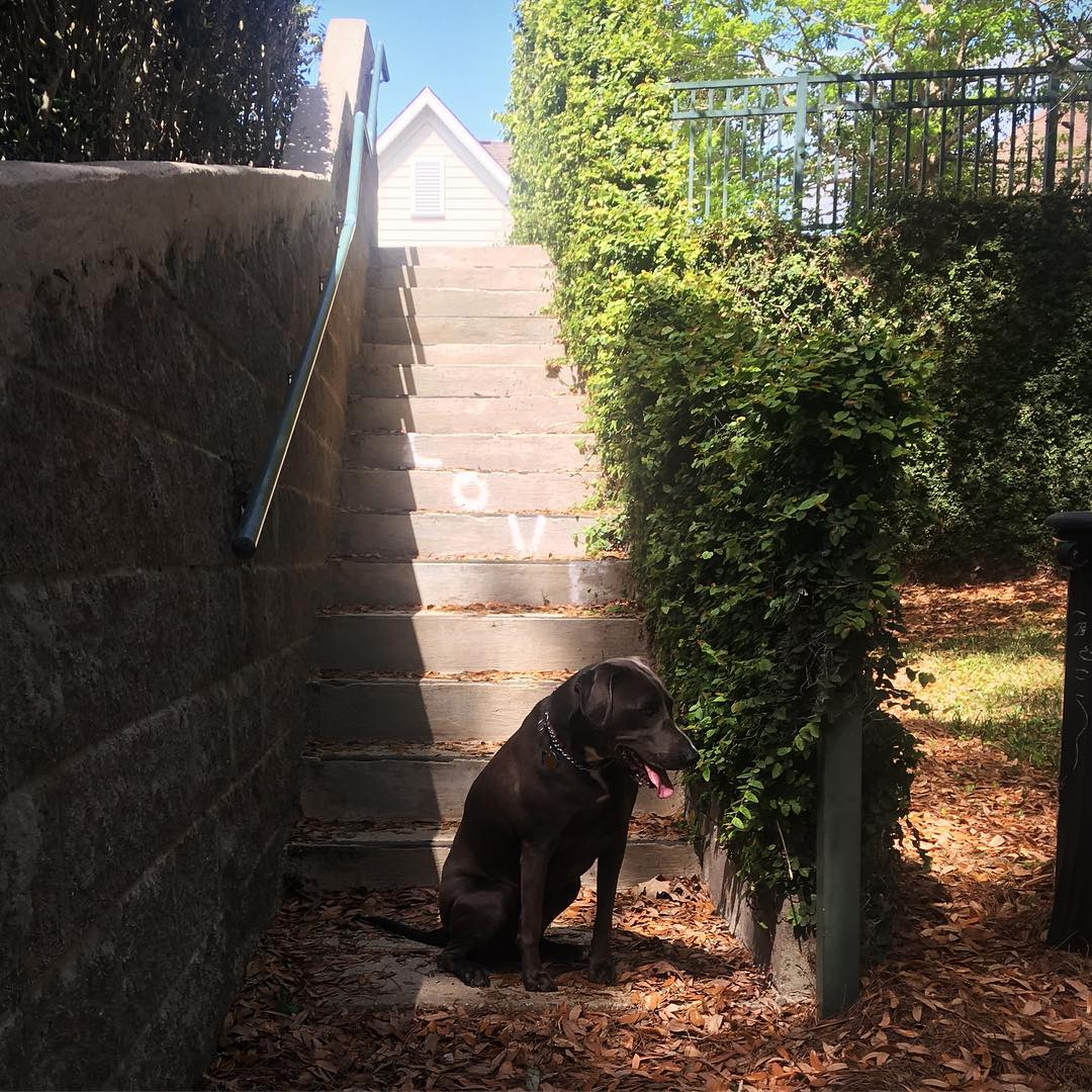 dog and stairs with painted word LOVE on steps
