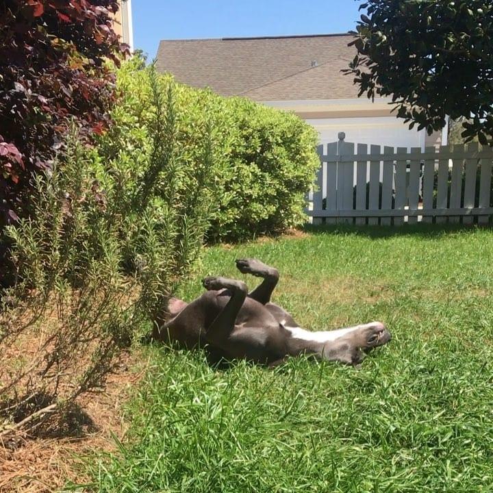 upside down dog in yard