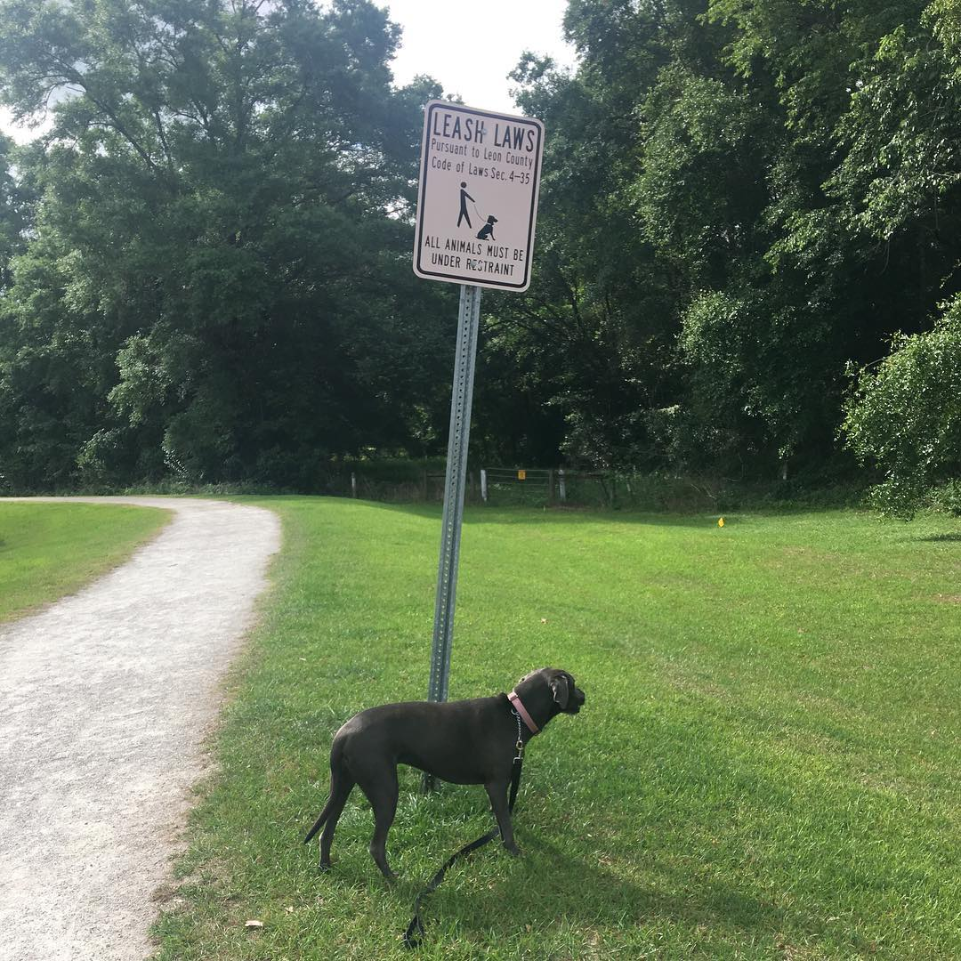 a leash-law sign