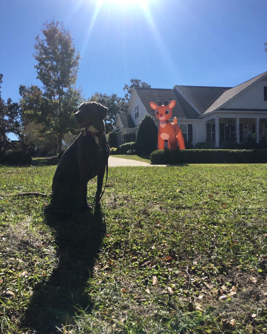 dog and xmas toys