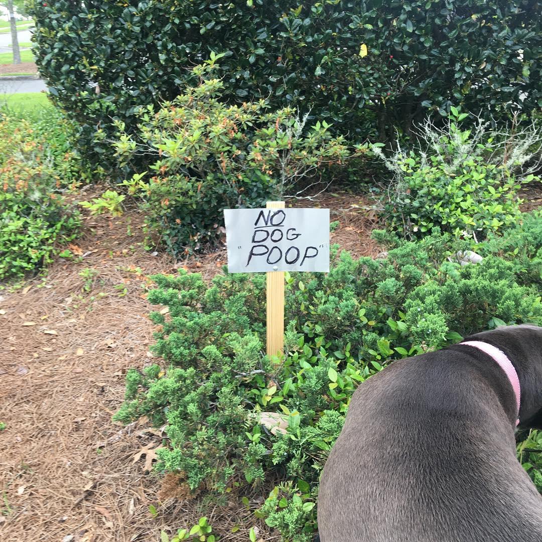 """sign reads no dog """"poop"""""""