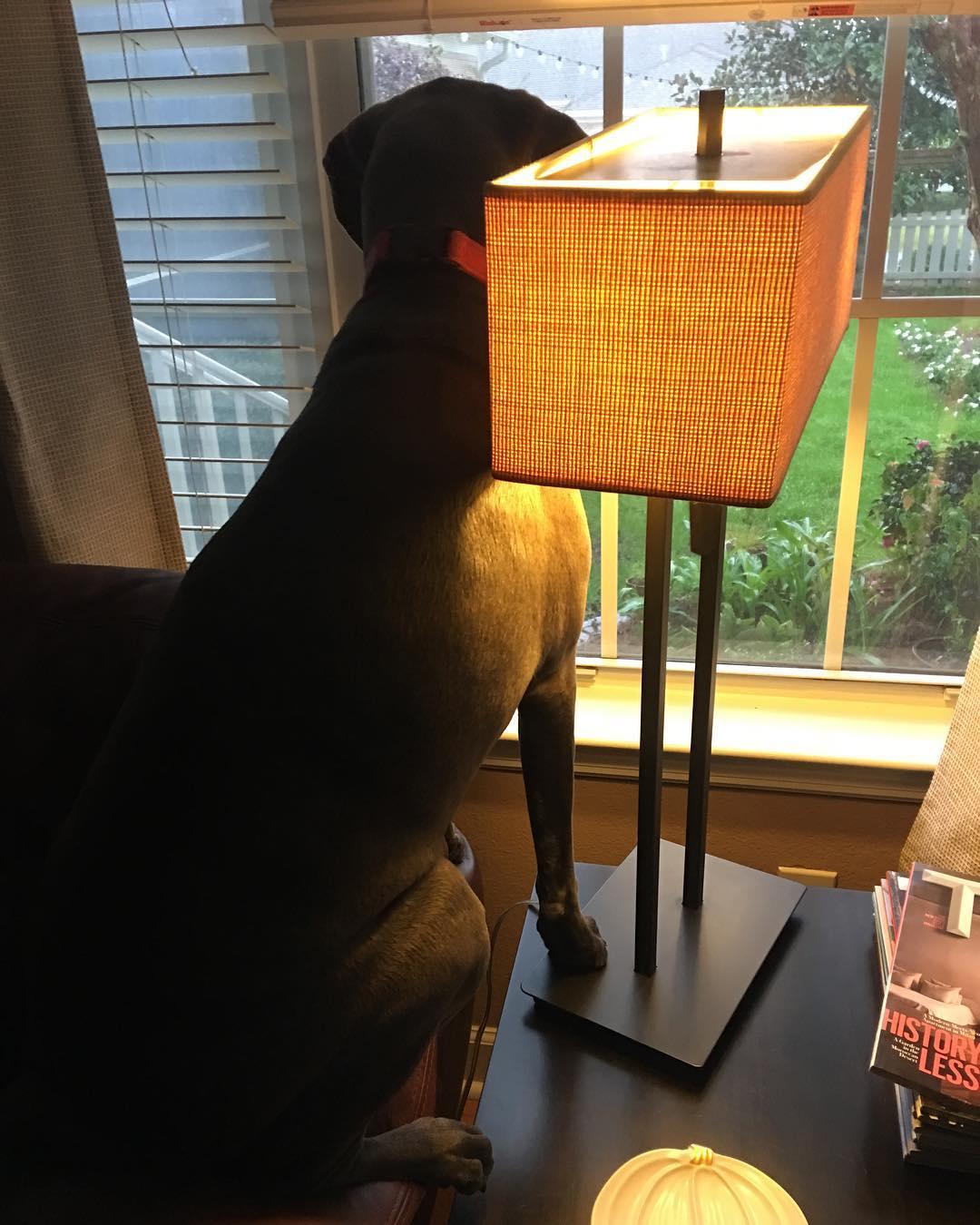 dog sitting on lamp