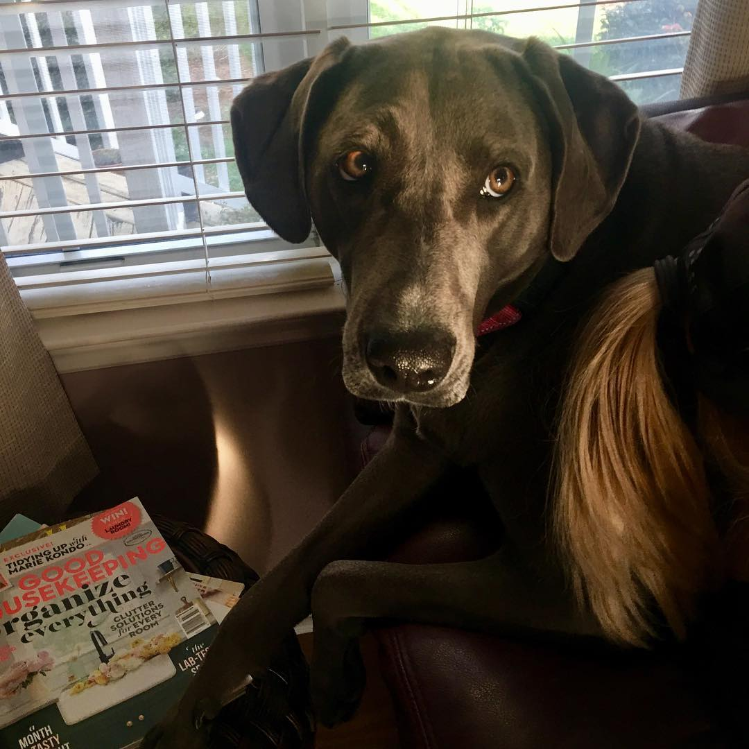 dog on back of soda with good housekeeping magazine in background
