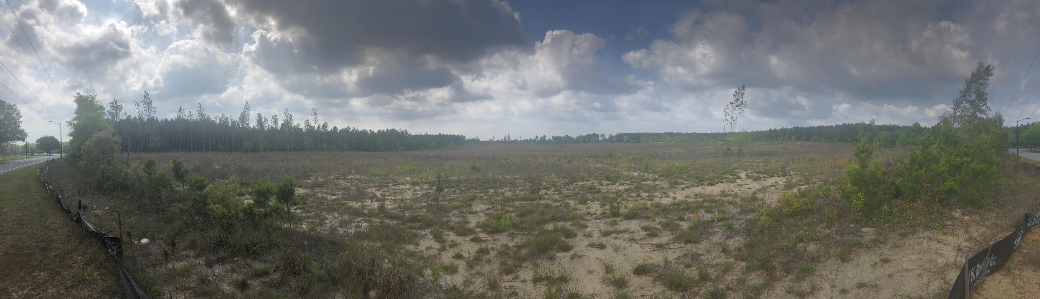 sandy scrubland