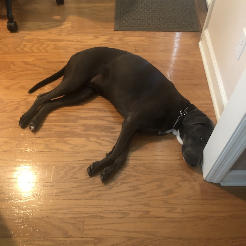 dog on hardwood floor