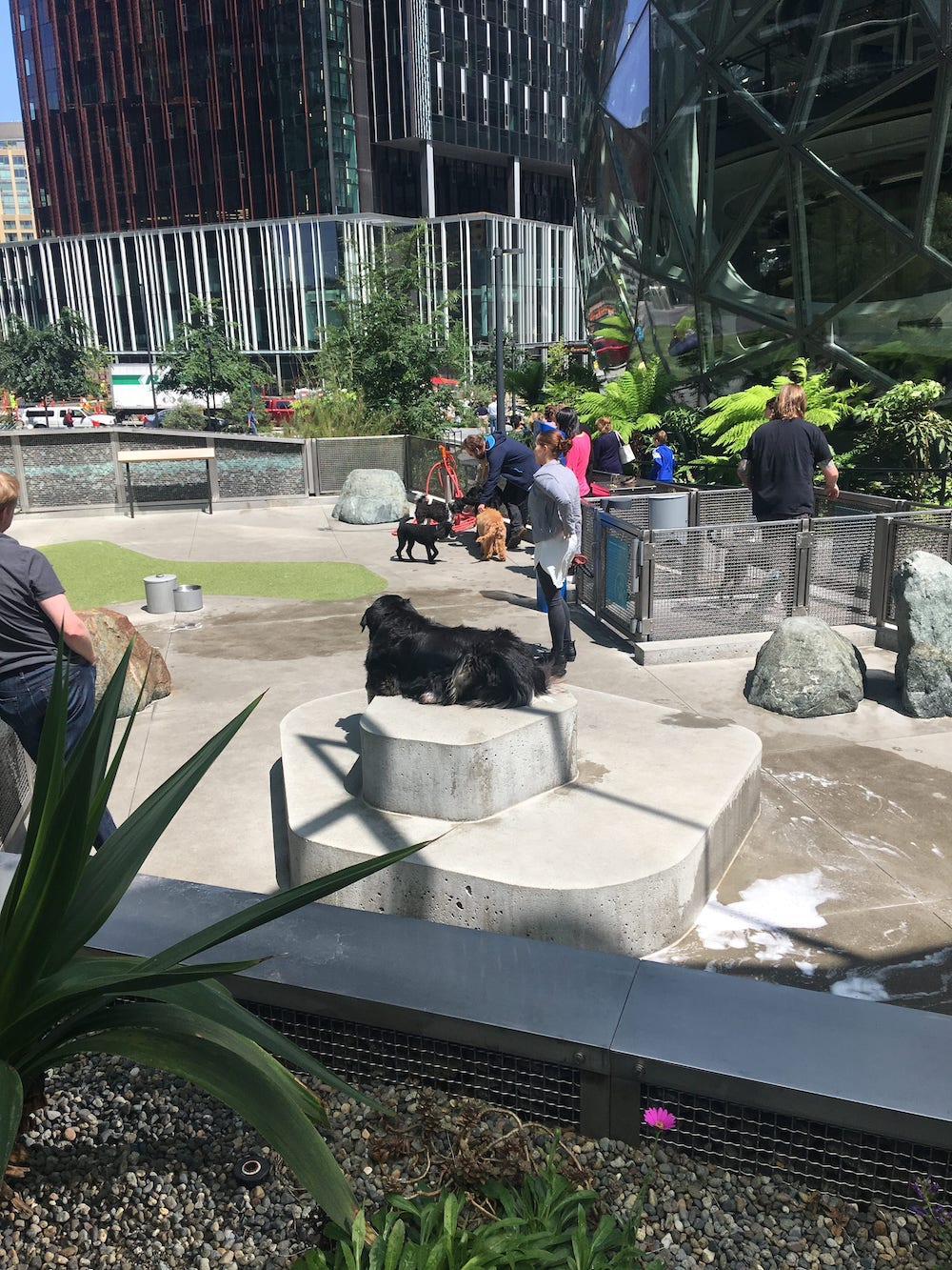outdoor dog park