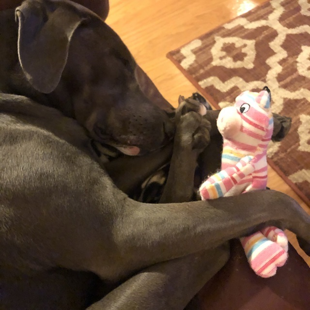 rey with her pig, asleep