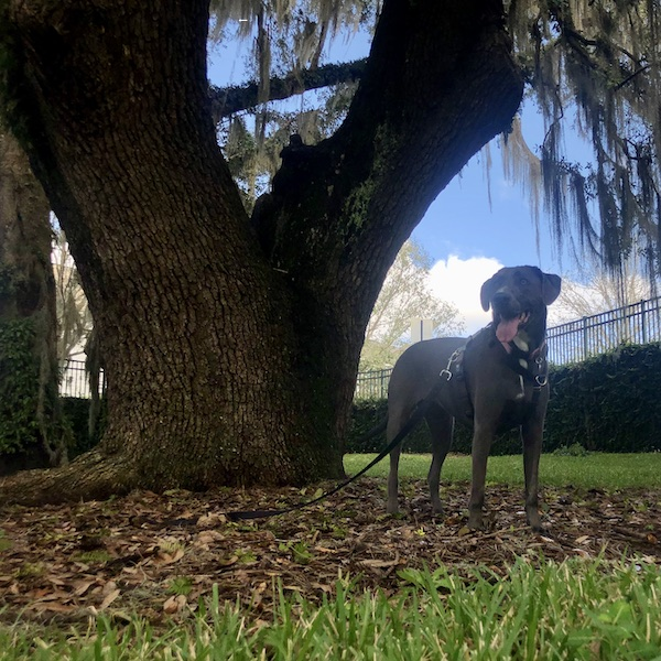 rey under a big old oak