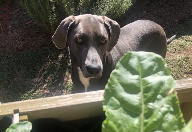 Rey in lettuce planter