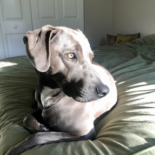 dog on bed in sun