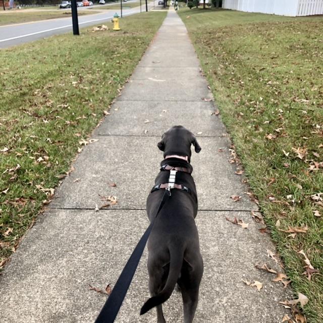 behind walking dog