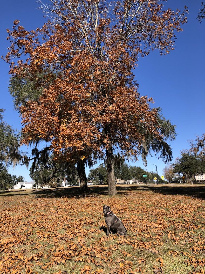rey in orange leaves under a tree