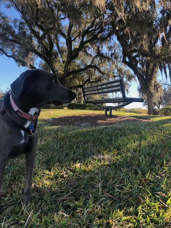 rey and an oak tree in the park