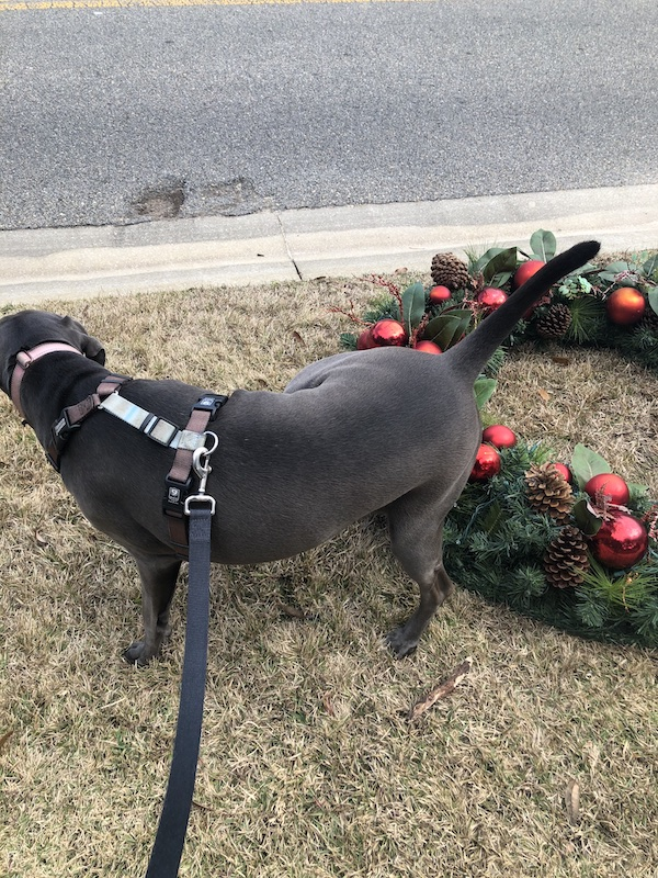 rey peein' on an xmas wreath placed by the curb for garbage pickup