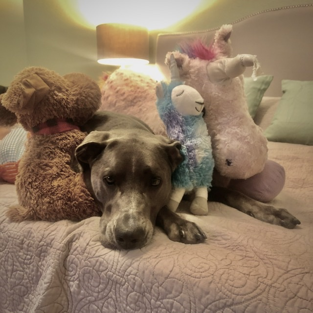anxious dog with toys