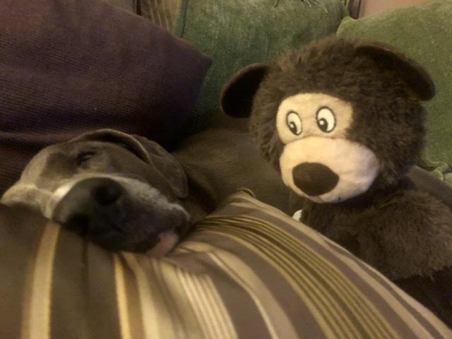 Dog and toy monkey